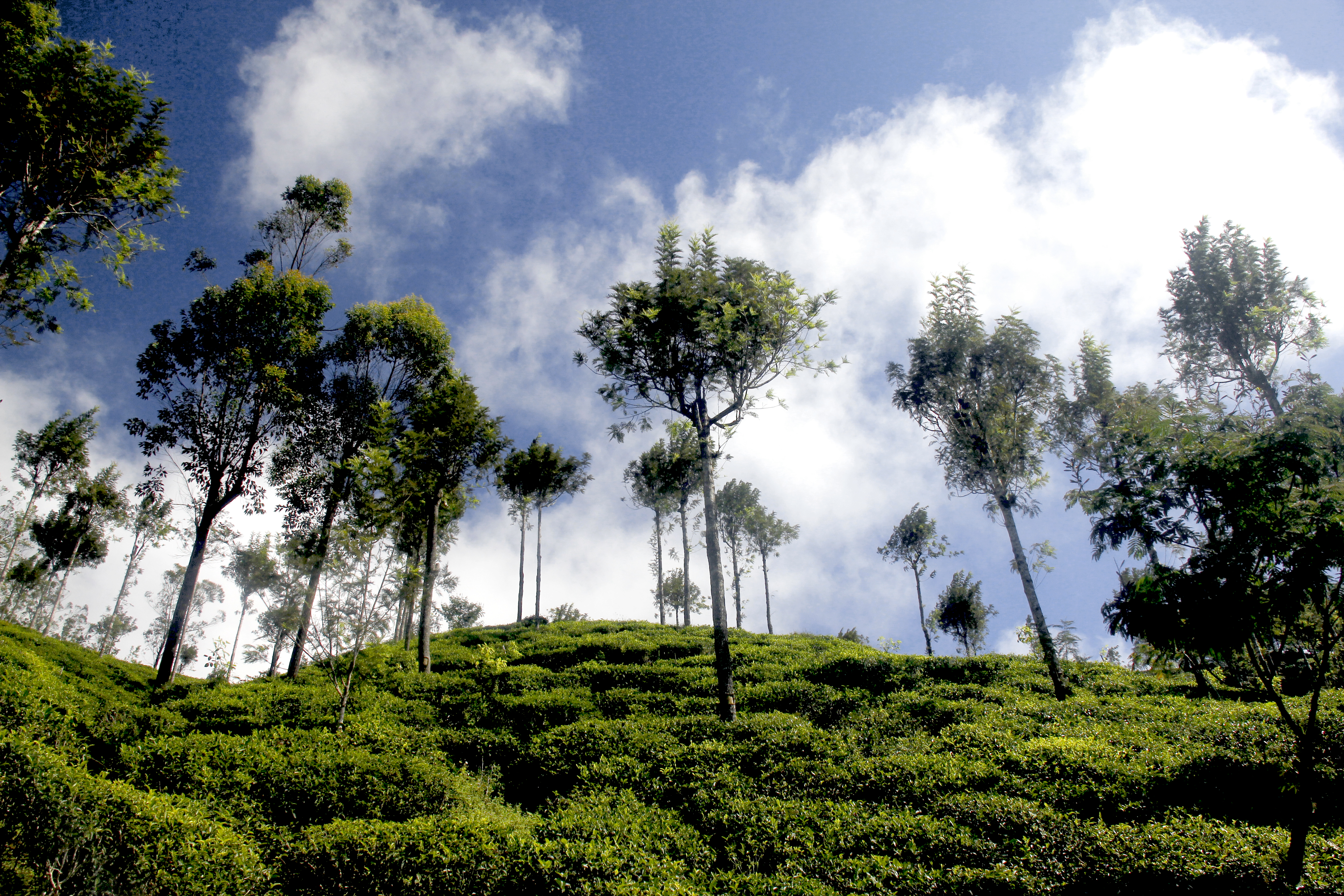Tea Trail Trek 3