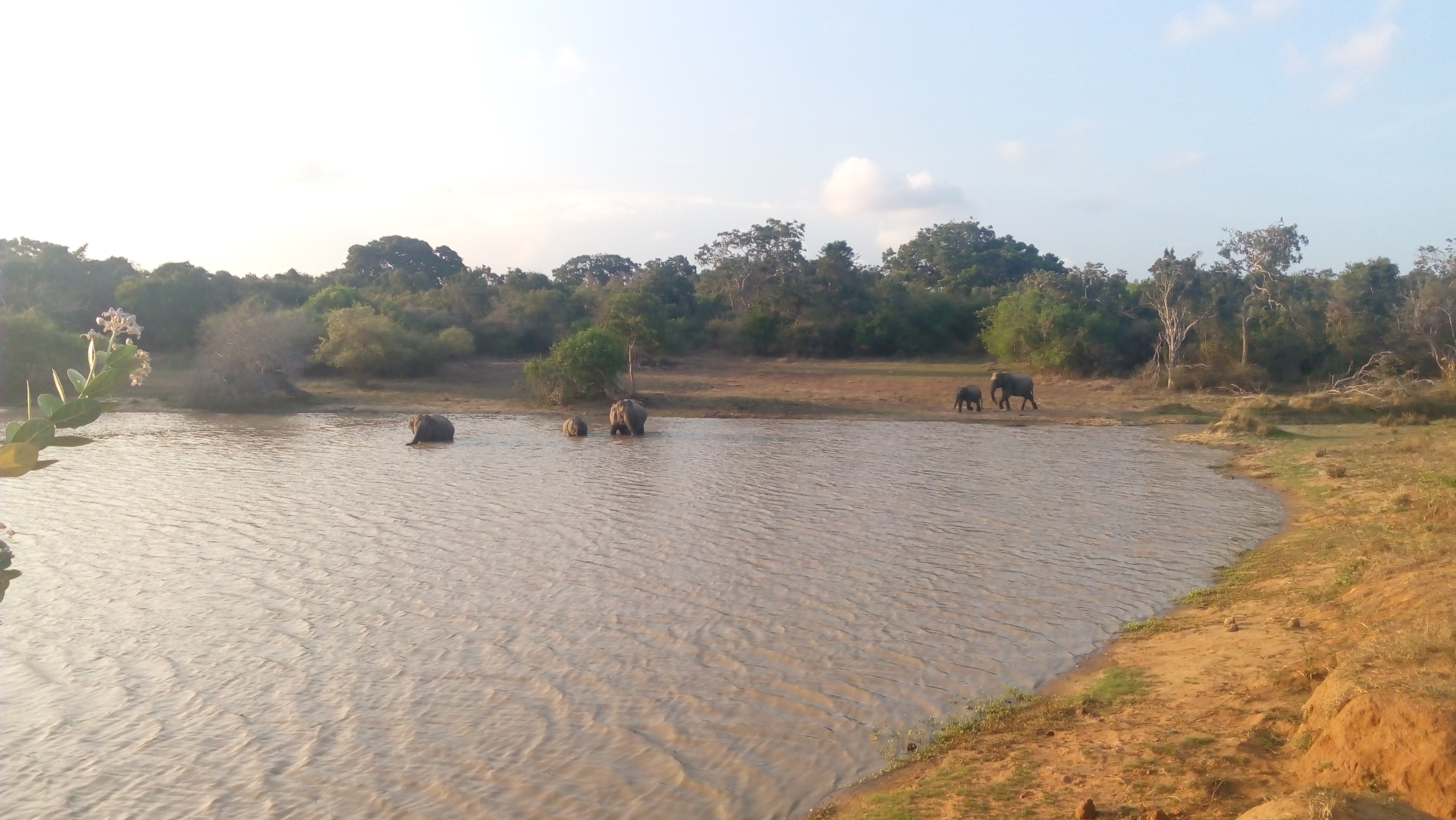 Yala National Park2